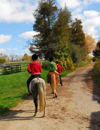 Introduction To Horse Riding Getting
